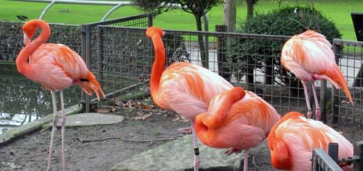 Зоопарк в г. Антверпен