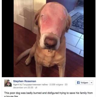 Собака с ветчиной