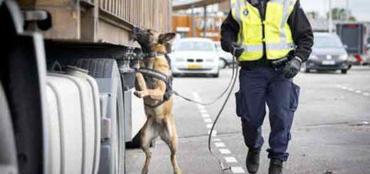 """На электронных бордах антверпенской магистрали вчера можно было увидеть такое сообщение: """"Всем авторефрижераторам: проверьте свой груз""""."""