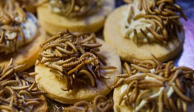 Фламандские школьников будут кормить насекомыми?