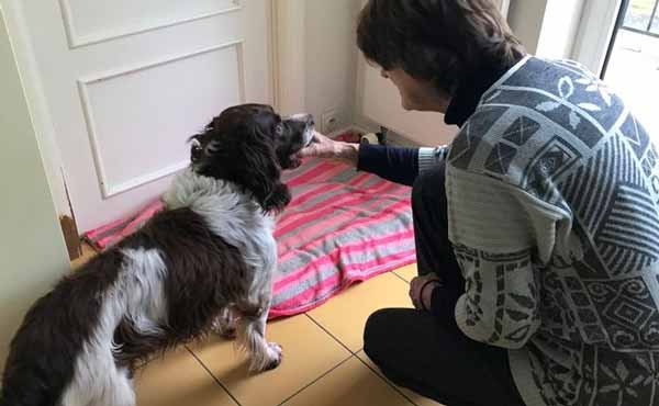 Бельгийский пес вернулся в канун нового года спустя шесть лет