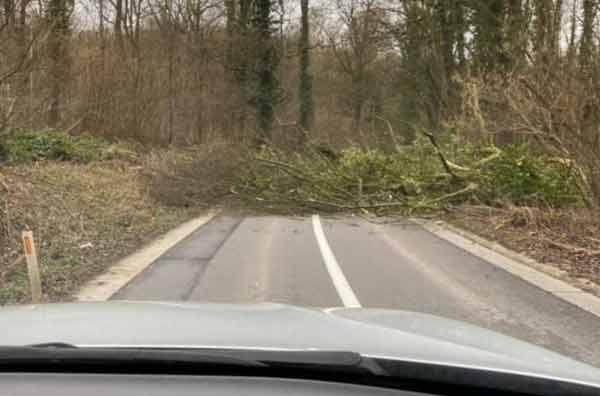 Остерегайтесь упавших деревьев