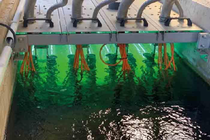 Исследователи из CSIC разрабатывают систему обнаружения циркуляции коронавируса SARS-CoV-2 в сточных водах